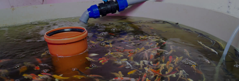 The Science of Aquaponics
